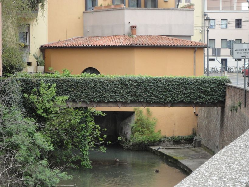 Looking good in green. Padua, Italy