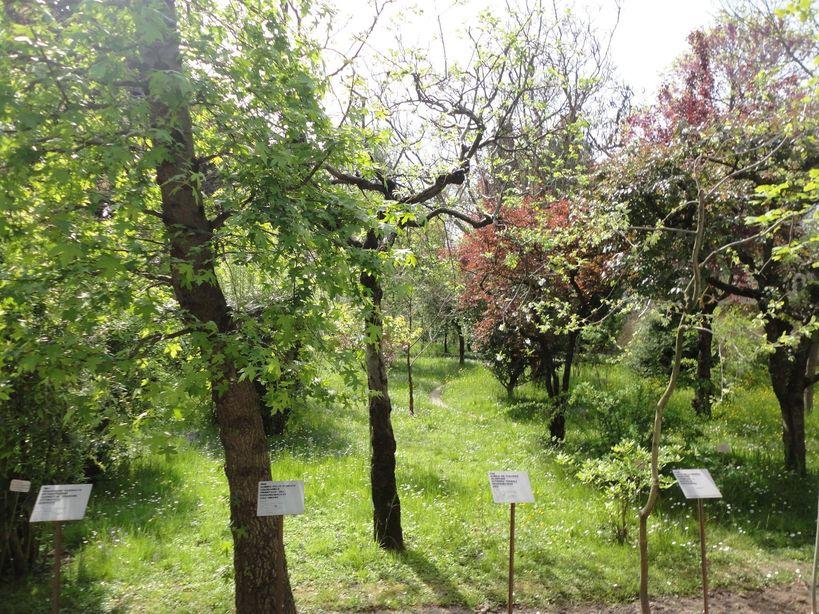 Botanical Garden. Padua, Italy