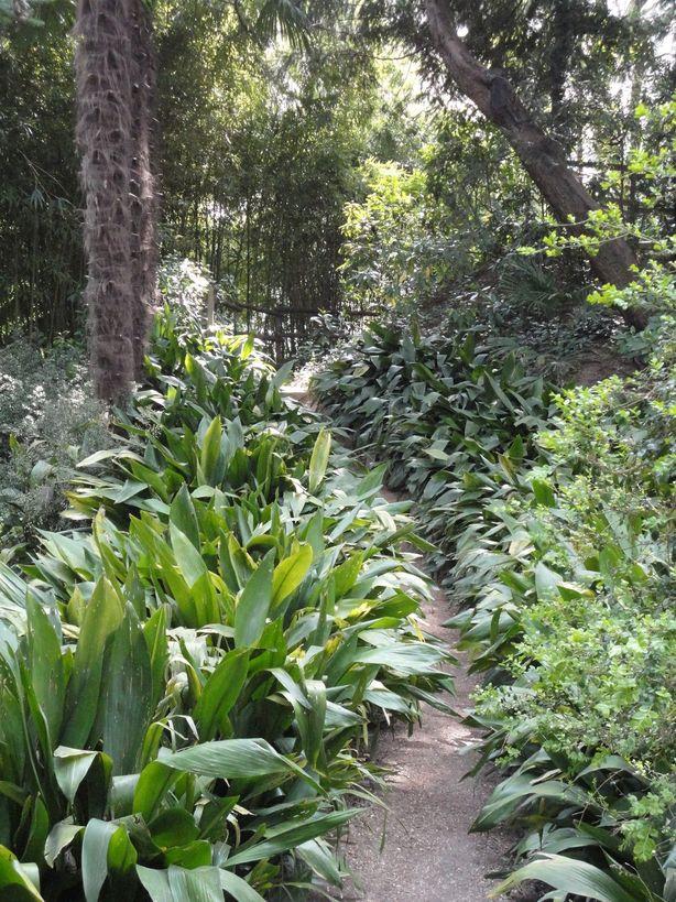 Take a walk. Botanical Garden of Padua, Italy