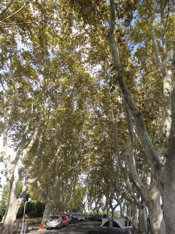 Where's the sky? Tree-lined path. Gianicolo Hill, Rome, Italy