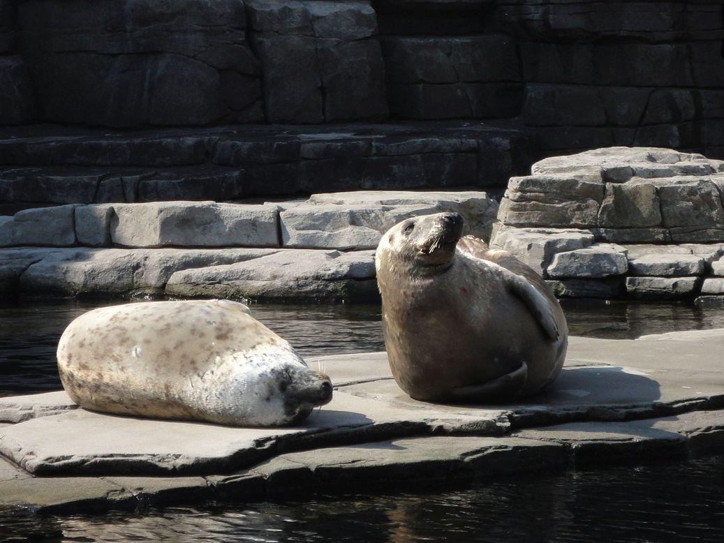 Basking in the sun. Hagenbeck Tierpark, Hamburg, Germany