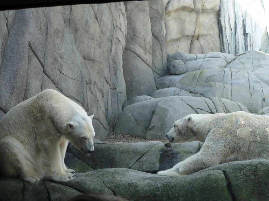 Two's company. Hagenbeck Tierpark, Hamburg, Germany