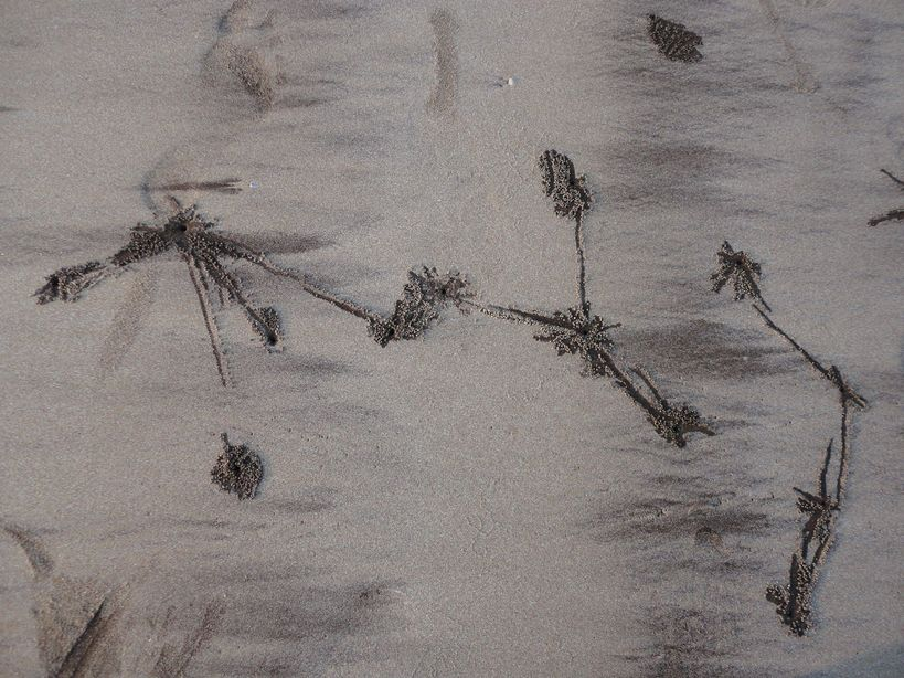 Who was Here? Prints in the Sand. Karde beach, Maharashtra, India