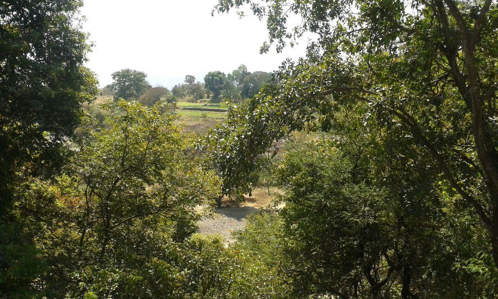 Green spaces. Baneshwar, Maharashtra, India