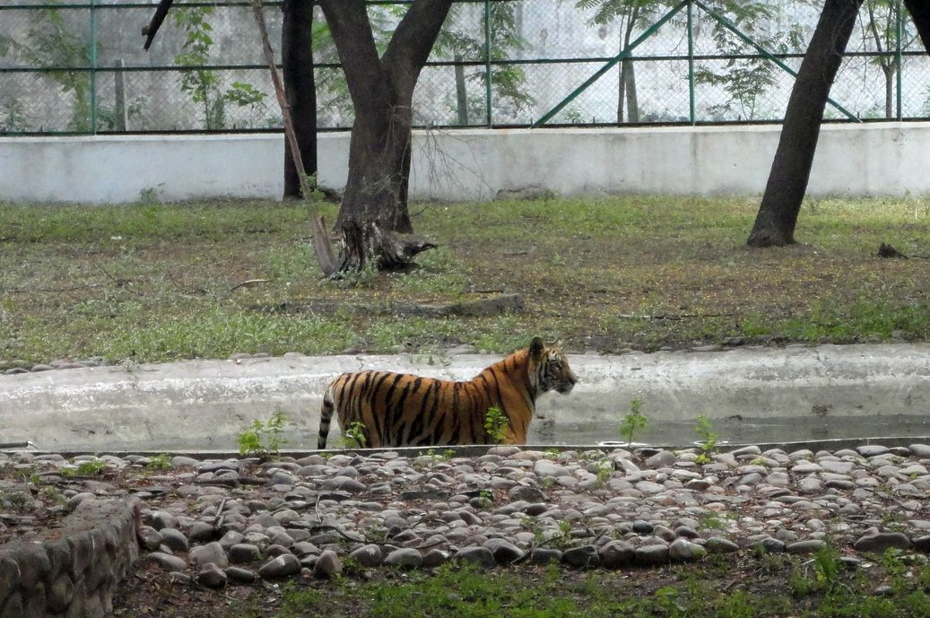 Setting the pace. Indore Zoo, India