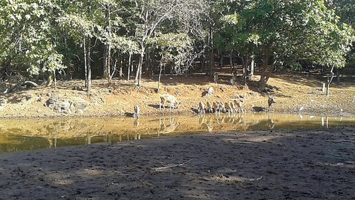 Inside the Satamaliya Deer Park. Dadra and Nagar Haveli, India