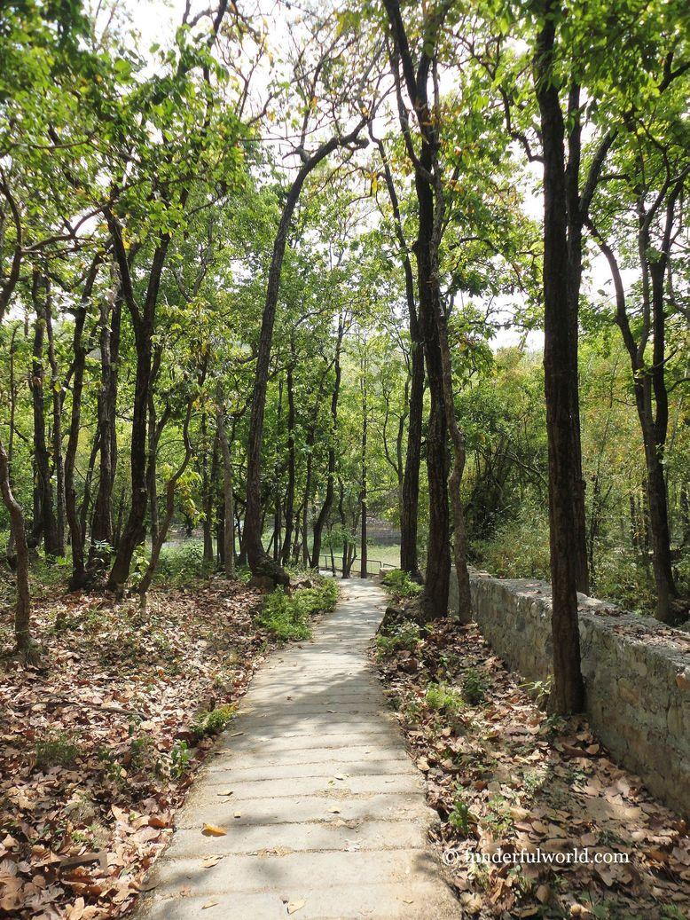 Following the trail. Malsi Deer Park, Dehradun, India.