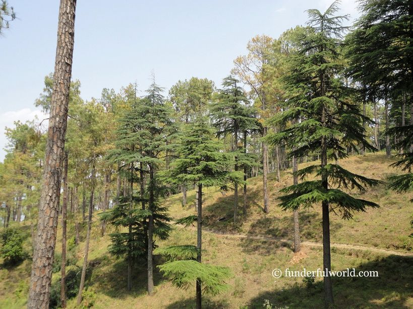 Who's the tallest of them all? At Simtola Eco Park, Almora, Uttarakhand.