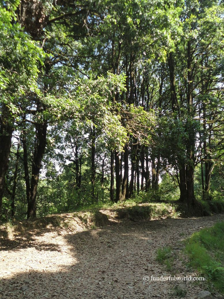 Forest trail. At Binsar Wildlife Sanctuary, Uttarakhand.